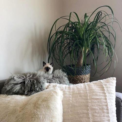 Dogs, Cats, Non-toxic houseplants, Houseplants, Dog, Cat, Pet safe plants, Pets, Pet tips, best houseplants