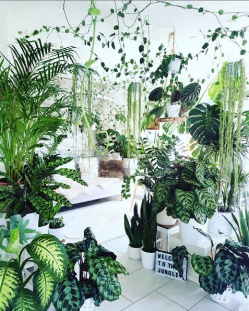 Crazy Plant Lady, Home decor ideas, Houseplants, Jungalow, Houseplant gift ideas, Plant lover gift ideas, Home decor ideas, urban jungle