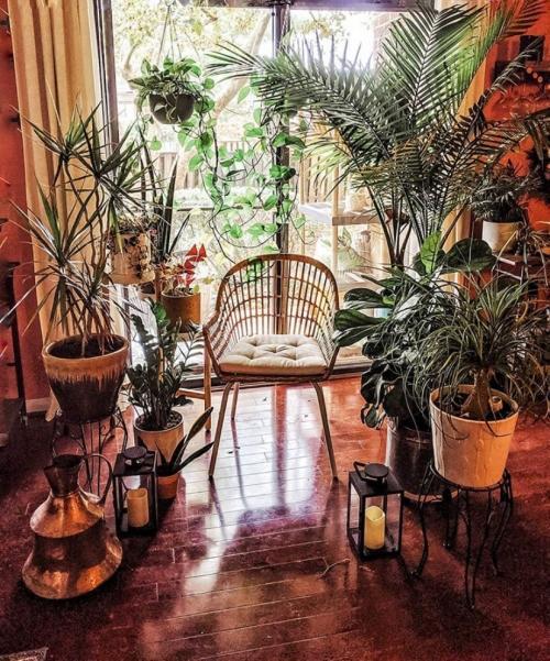 ZZ plant, Zanzibar gem, Zuzu plant, aroid palm, eternity plant or emerald palm, Zamioculcas zamiifolia, Home decor inspiration, easy houseplant, beginner houseplant, low light houseplant, Home ideas, Bohemian Home